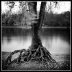 Mississippi Tree