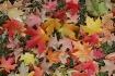 ~Hues of Fall~