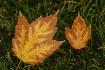 ~Fall Pair~