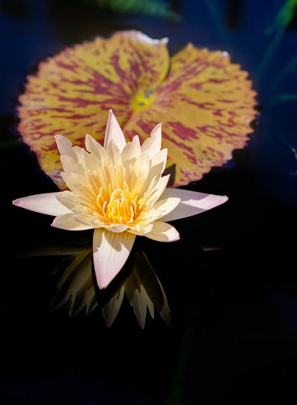 Lone Lily - ID: 11076189 © Steve Abbett