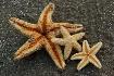 ~Beach Stars~