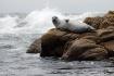 Sunbathing Seal