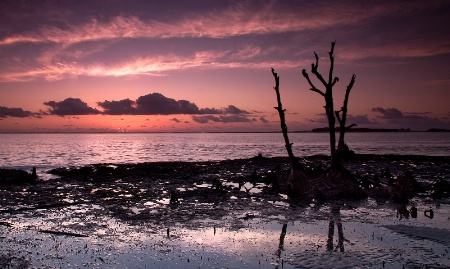 "Dawn""s Early Light"
