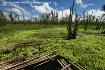 Surreal marsh lan...