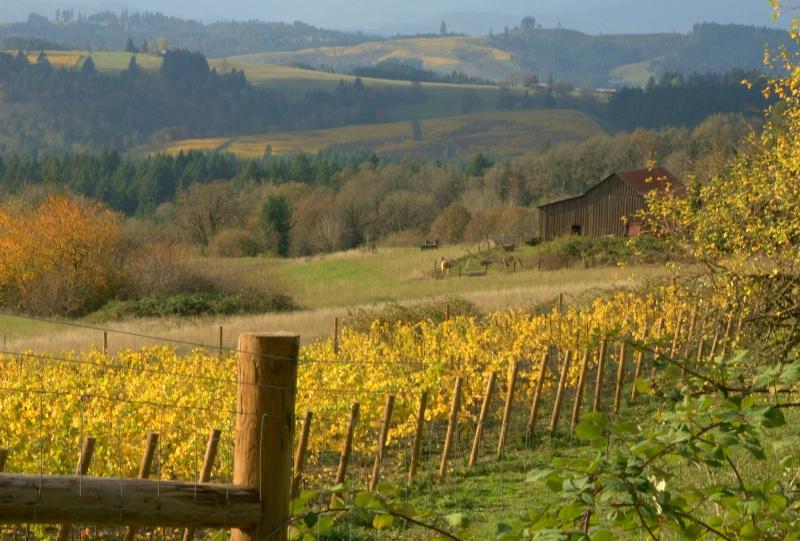 autumn vineyard hillside - ID: 11118954 © cari martin