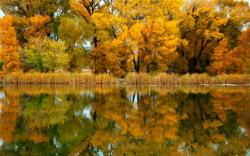 Tales of the Cottonwood