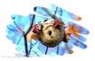 Bald-faced Hornet...