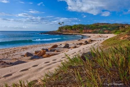 beach landscape 8