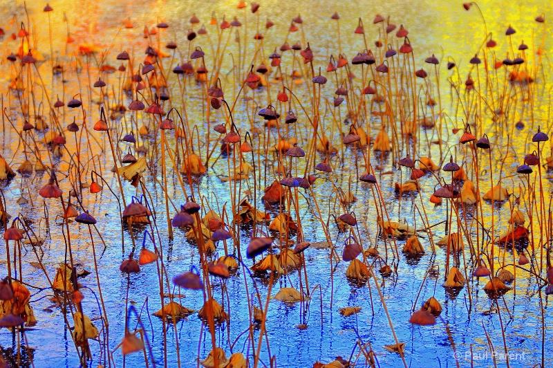 Winter Lotus Garden - ID: 11152503 © paul parent