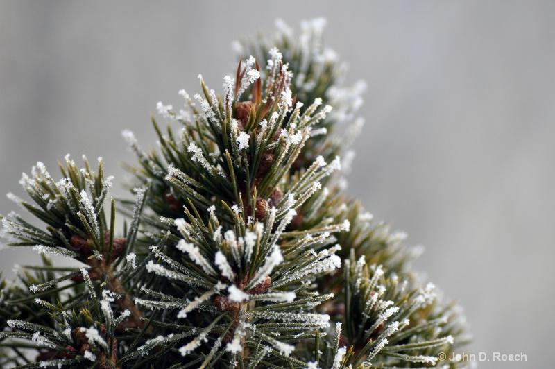 First Frost - ID: 11160668 © John D. Roach