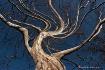 tree - twirl filt...