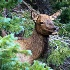 2Peeking Thru the Woods - ID: 11181451 © Richard M. Waas