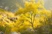 Sidelit tree