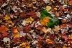 Autumnal Wave