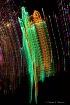 Zoo Lights  In De...