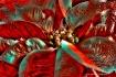 Wild Poinsettia