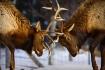Reindeer Games!!