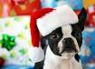 Merry Frickin'...