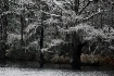 Cypress Winter