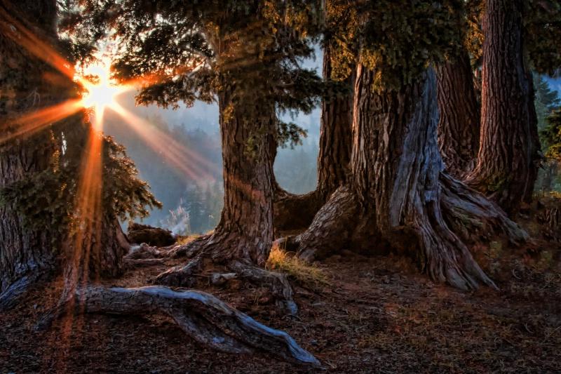 Glorious Forest - ID: 11308562 © Karen Celella