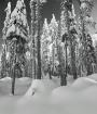 Snowy Sentinels o...