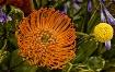 Protea Pin Cushio...