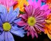 birthday flowers ...