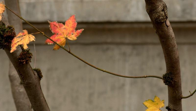 leaf  between - ID: 11343849 © cari martin