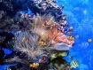 Clownfish Refuge