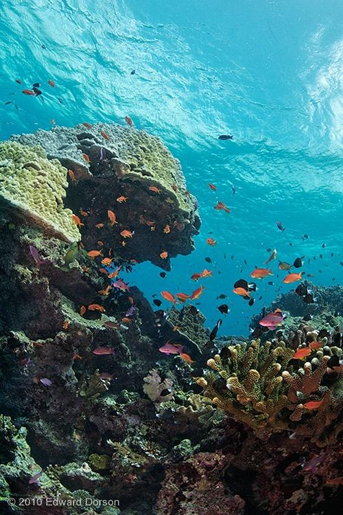 Coral Outcrop  - ID: 11360336 © Edward Dorson