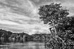 Mangroves of Pala...