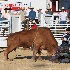 2I Think the Bull Won - ID: 11400670 © Richard M. Waas
