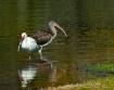 two ibis dsc 0509