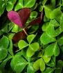 Natures Valentine