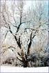 Winter Tree Desig...