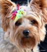 Canine Cutie