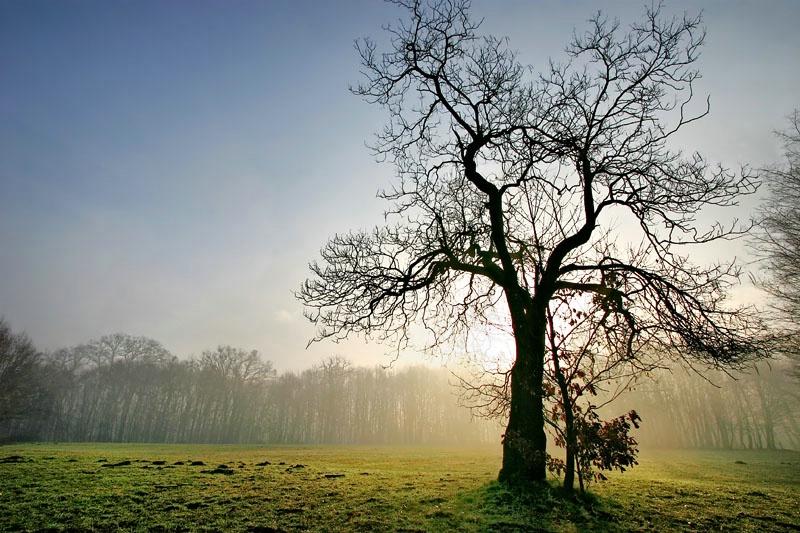 Behind Tree