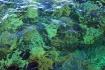 clear-water myste...