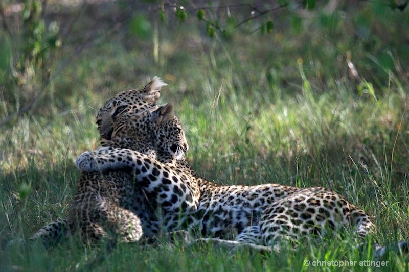 DSC_9654 Leopard mother & cub - ID: 11467201 © Chris Attinger
