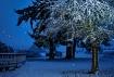 Late Winter Morn
