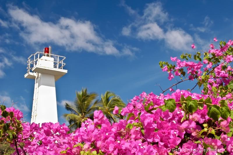 Lighthouse & Bougainvillea