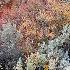© Sandra M. Shenk PhotoID # 11480722: Fall foliage