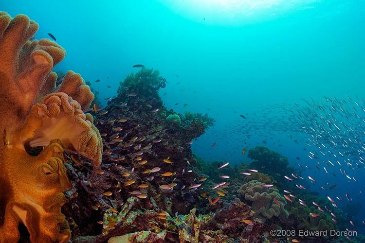 Coral Scenic - ID: 11489229 © Edward Dorson