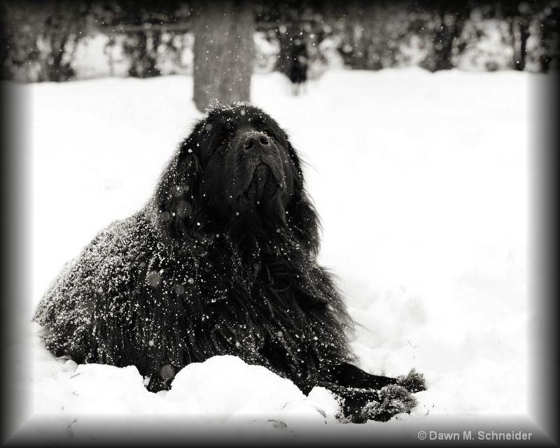 Sniffin Snow