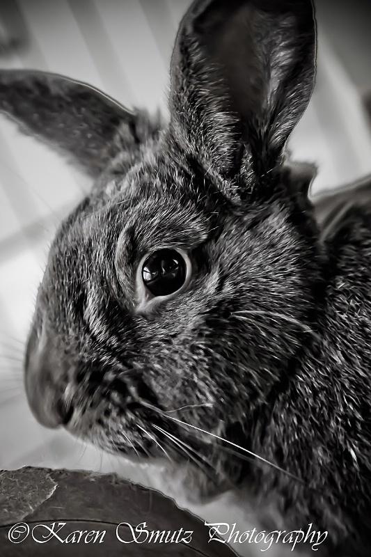 Da Bunny - ID: 11563144 © Karen N. Smutz