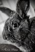 Da Bunny
