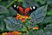 Pretty Butterfly....