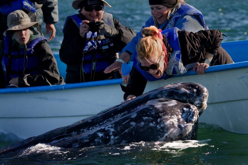 Our Gray Whale - ID: 11568033 © Karen Celella