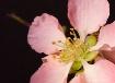 Delicate Spring B...