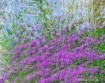 Spray of Color